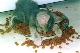 sleeping kitten in food bowl